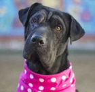 Pet of the Month: Princess looking for her palace