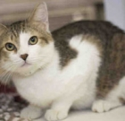 Pet of the Month: Active tabby seeks playful parents