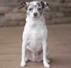 Pet of the Month: Adorable Coco Bean is leash and house-trained