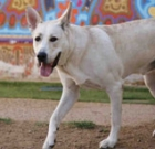 Pet of the Month: Rex could be the king of your castle