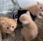 Five ways to aid stray kittens
