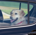 Saving dogs left alone in hot cars