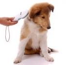 AAWL offers low-cost microchipping