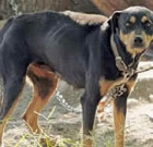 New tethering law goes into effect