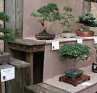 Bonsai, pottery exhibit at garden