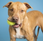 Pet of the Month: Shaw would make a great family dog