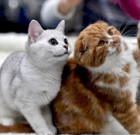 Cat show, adoption event on March 9