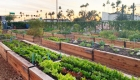 Learn how gardens grow at free class